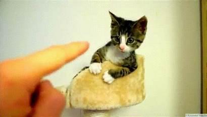 Cat Gifs Adorable Funny Kitty Smile Sad