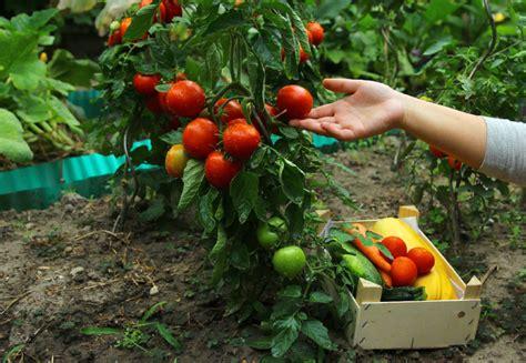 meal garden of food is replacing esthetics in the garden toronto