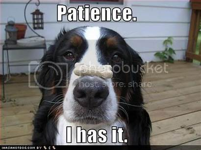 Patience Funny Waiting Patiently Woozles Dog