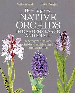 How To Grow Native Orchids In Gardens Large And Small  A