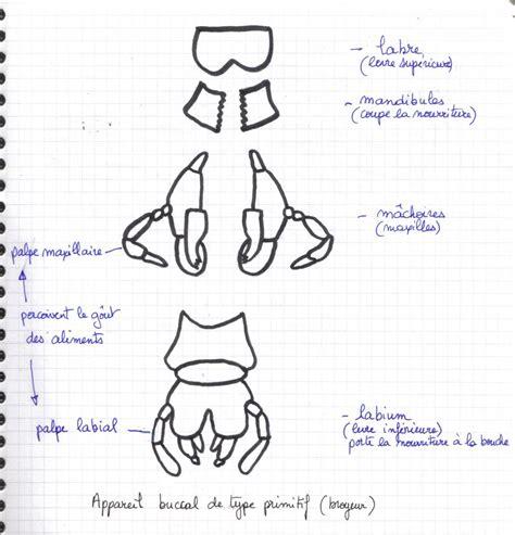 cuisine de reference pdf structure d 39 un insecte