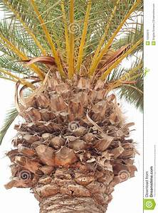 Detail Of Palm Tree Trunk Royalty Free Stock Images