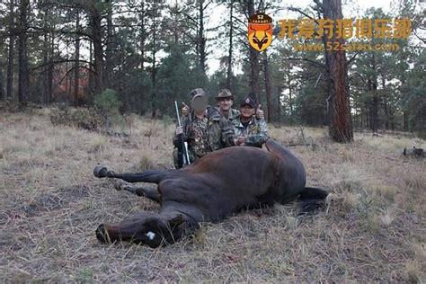 chinese trophy hunters kill  wild mustang horse  utah