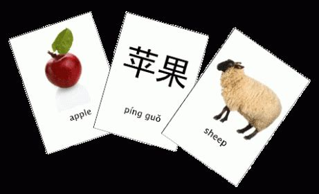 flashcards  simple app  vocabulary learning