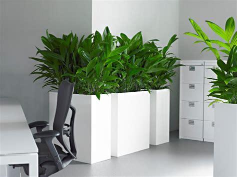 plante pour le bureau plante bureau photos de magnolisafleur