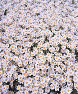field if daisies | Tumblr