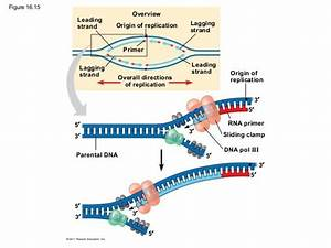 16 The Molecular Basis Of Inheritance