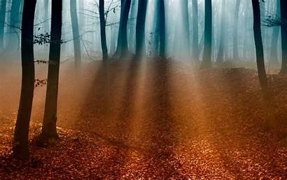 Meditation Desktop Wallpapers Widescreen Sunshine Autumn Foresta