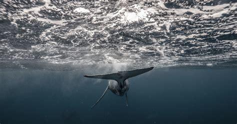 marine conservation  diploma