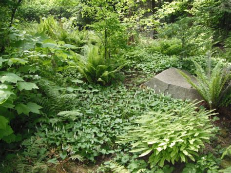 Native Plants Pnw  An Encyclopedia Of The Cultural And