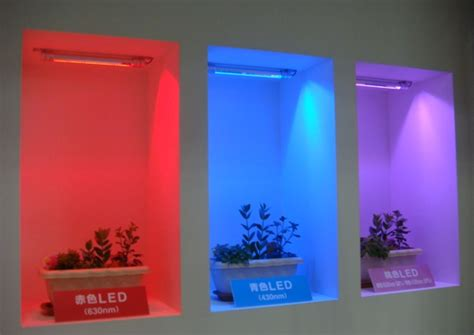 different color lights is pink best led color to grow plants nikkei xtech