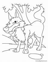 Coloring Wolf Coyote Pages Bad Peter Jungle Popular Dog Coloringhome sketch template