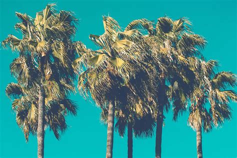 Let's Go Coconuts! Enjoy 10 Tropical Iphone Wallpapers