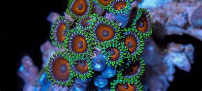 Coral Colourful Something Corals Special Movement Beauty