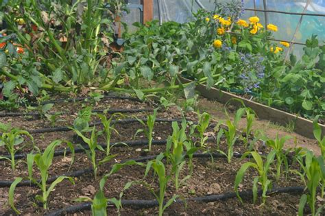 how to set up a garden how to set up a rainwater irrigation system for your gardengreenside up