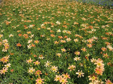 flowers to plant in for summer bloom summer blooming perennials to plant now