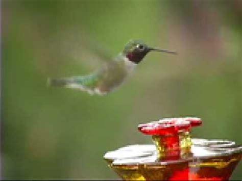 full download shelter hummingbird feeder wind weather