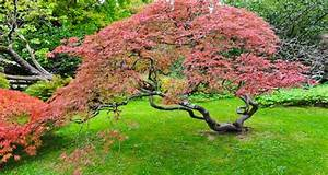 Quel Arbre Planter Près D Une Maison : les 8 plantes f tiches d 39 un jardin zen deco cool ~ Dode.kayakingforconservation.com Idées de Décoration