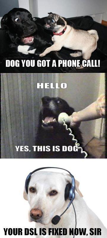 phone dog hilarious meme remixes  pics