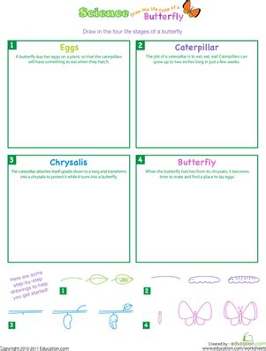 draw the life cycle of a butterfly worksheet education com