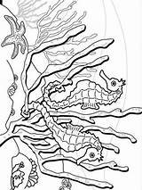 Seahorse Coloring Pages Fish Colors Recommended sketch template