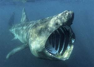 10 Interesting Shark Facts In Fact Collaborative