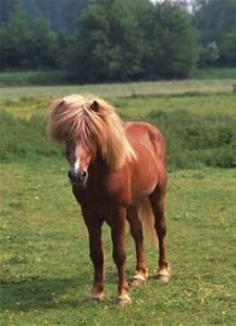Elefantenhaut Auf Putz : pferde island pony isl nder 2 teilig fototapeten online im shop von 1art1 kaufen ~ Yasmunasinghe.com Haus und Dekorationen