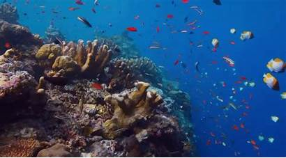 Coral Reefs Polyps Types Water Well