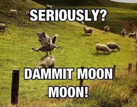 Moon Moon Meme - image 534240 moon moon know your meme