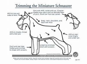 Pet Grooming Tips