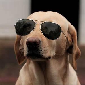 Funny dog 2 by Cathita on DeviantArt