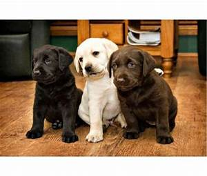 pet adoption centers and breeders