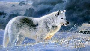 Hình nền chó sói đẹp cho máy tính Hình động vật