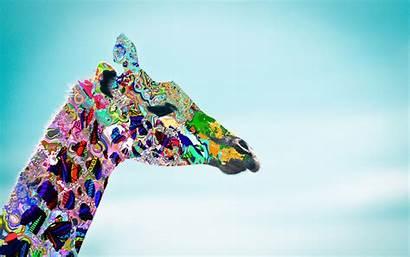 Giraffe Wallpapers Backgrounds Background Desktop Psychedelic Attempt