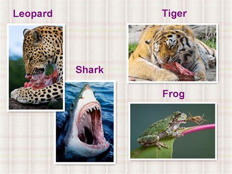 carnivores examples animals habits feeding eating
