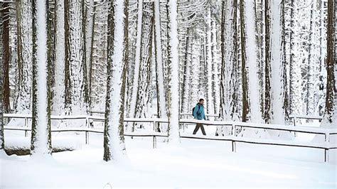 neve sul limbara grande nevicata del gennaio  video sardegna