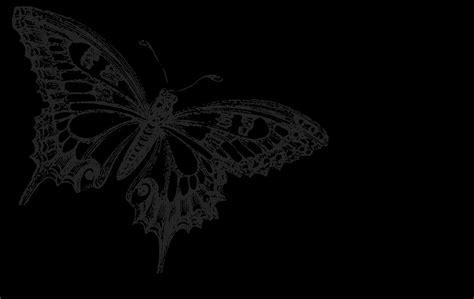 Cool Car Wallpapers For Desktop 3d Butterflies Tattoos by Black Butterfly Background Wallpaper Wallpapersafari