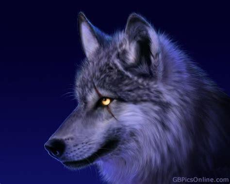wolf mit narbe ueber dem auge bild  gbpicsonline