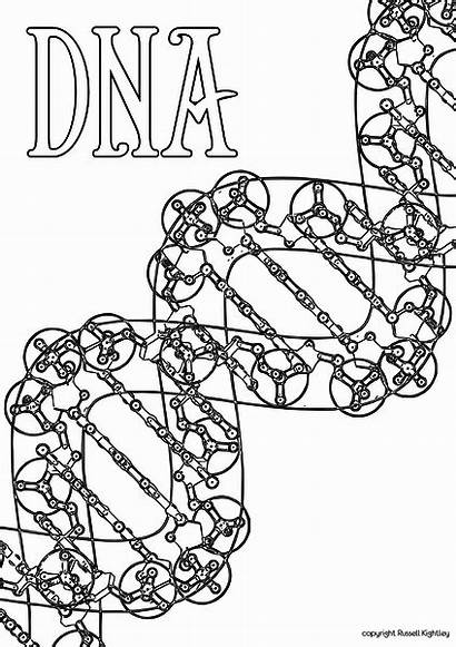 Dna Coloring Activity Genetics Heredity Pages Colouring