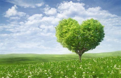 Green Tree Hd Wallpaper by Wallpaper Tree Green Landscape Hd 4k