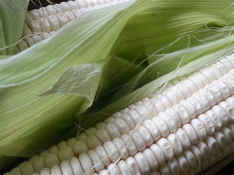 White maize, mahangu price relief - Agriculture - Namibian Sun