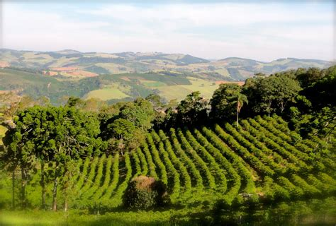How One Family Farm Is Changing The Face Of Brazilian Best Instant Coffee Way Bialetti Maker Filter Vintage Italian Powder Uk Moka Pot Vs Espresso Gasket Chemex Machines London