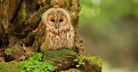 beautiful owl baby wallpaper hd wallpapers