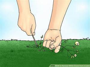 How to Remove White Clover from a Lawn: 6 Steps (with ...