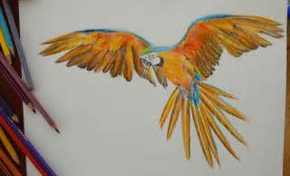 Colored Pencil Parrot Drawing