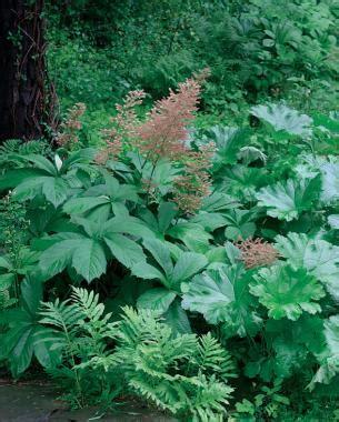 Bigleaved Perennials Finegardening