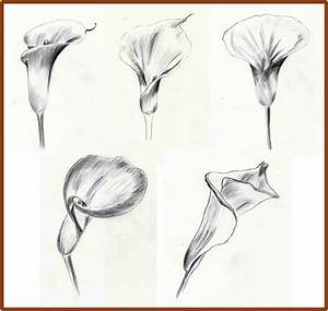 Weekly : Doodles and tuts: How to draw a Calla Lily - Method 1