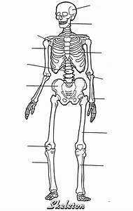 Label The Skeleton Quiz