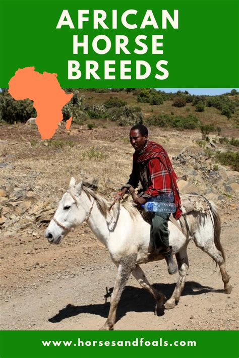 horse breeds cradle african horses africa civilization native sea continent each different