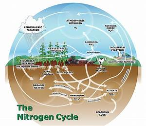 How To Estimate Nitrogen Loss From Leaching